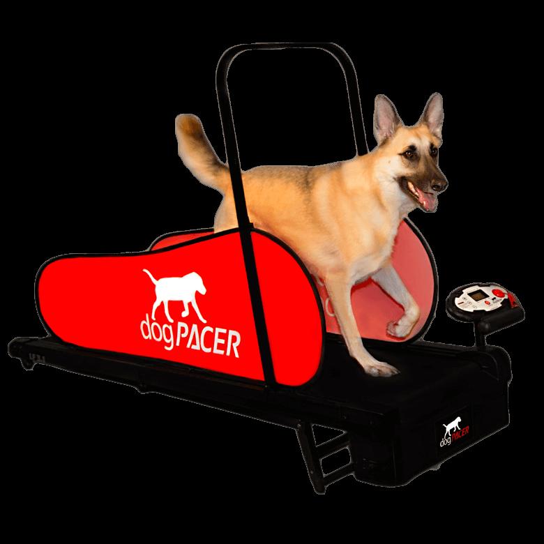 Hvorfor dogpacer?