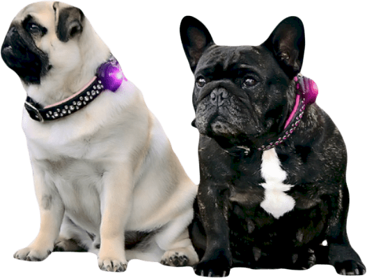 Orbiloc Dog Dual