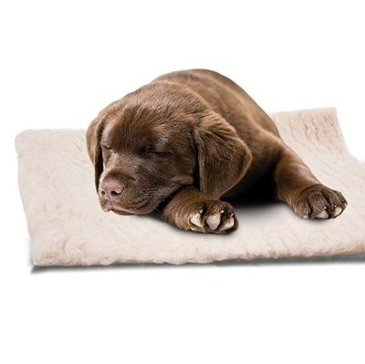 Dry bed ozami hundeseng