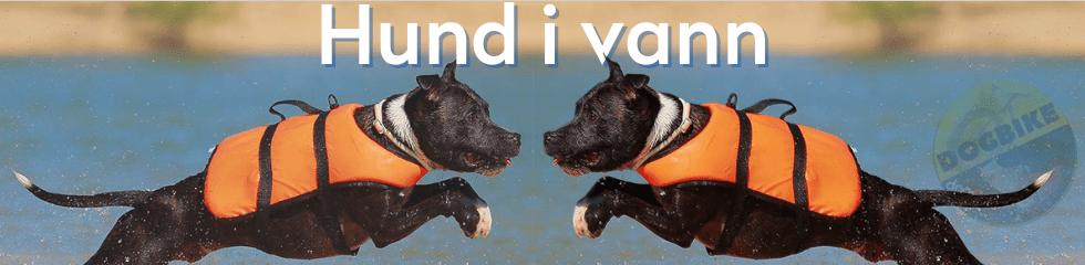 dogbike hund i vann