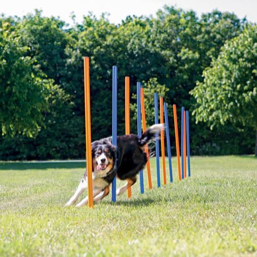 Trixie agility slalom