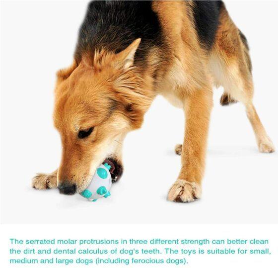 Tannrenseball hund