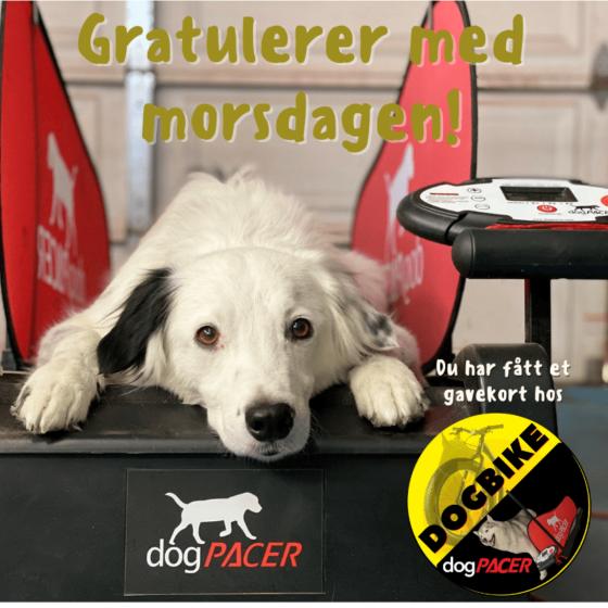 Gavekort Dogbike-DogPacer